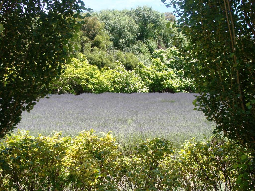 Lavendula Lavender Farm Daylesford