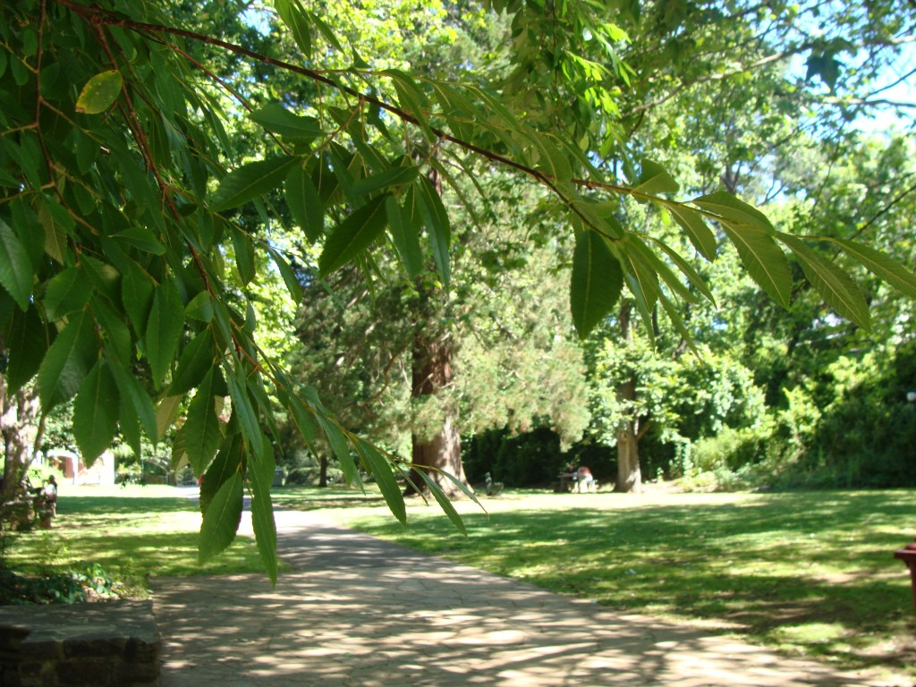 Hepburn Mineral Spa gardens