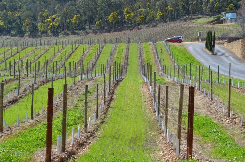 Vines at Boynton's Feathertop Winery