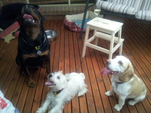 Apollo, Wesley and Cookie awaiting a treat