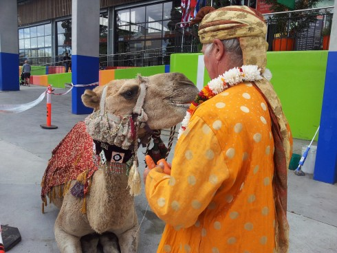 Camel at Dandenong World Food Fare.