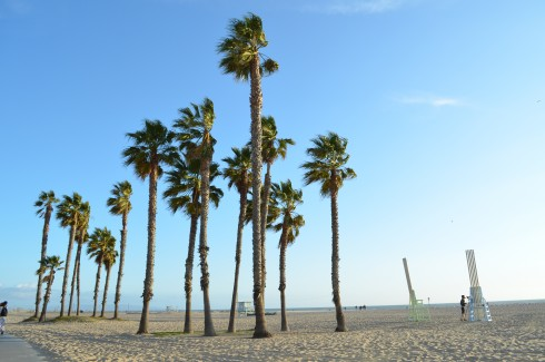 swaying palm trees at santa monica