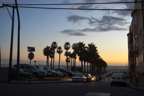 palm trees by sunset at santa monica